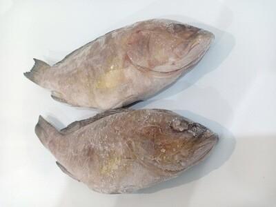 Lapu Lapu (Grouper) for Export 1Kg