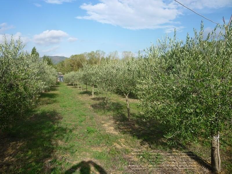 SAN BENEDETTO. Terreno agricolo di mq 2500 con annesso e oliveto
