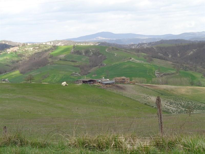 ORVIETO. Azienda agraria di 137 ha adibita ad allevamento