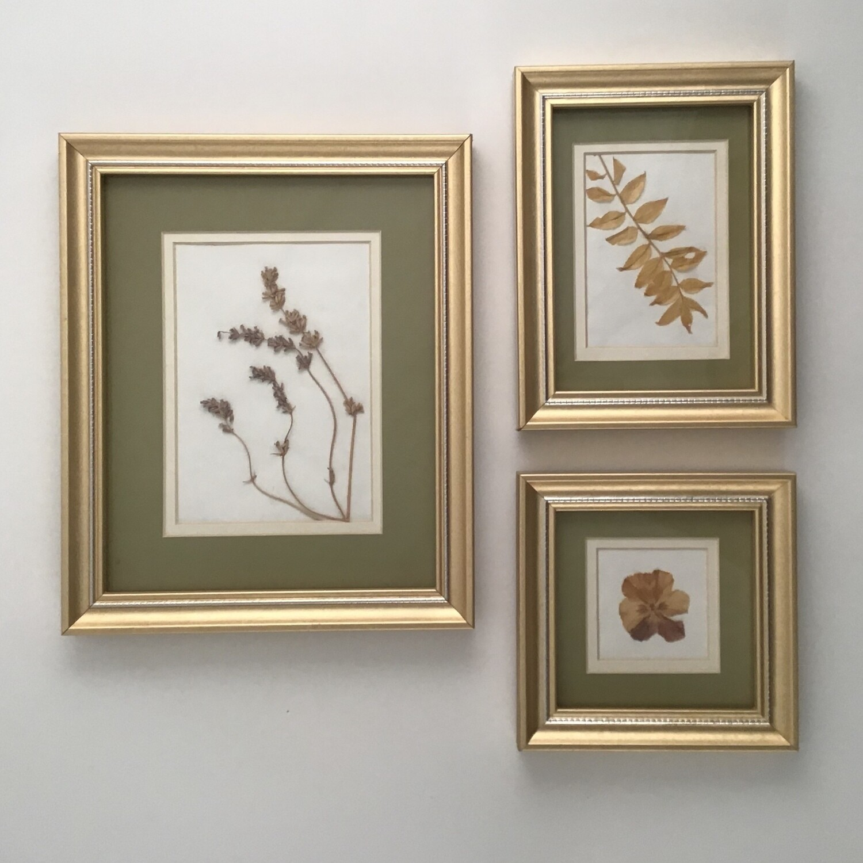Pressed Flowers  Framed