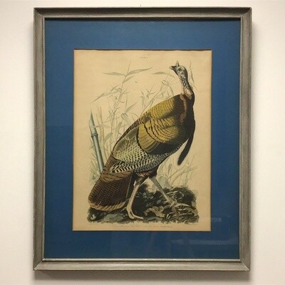 Reproduction John J Audubon Wild Turkey Plate From Birds Of America