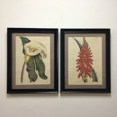 Pair Of Framed Botanical Illustrations