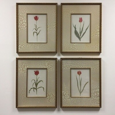Set Of Four Framed Flower Prints
