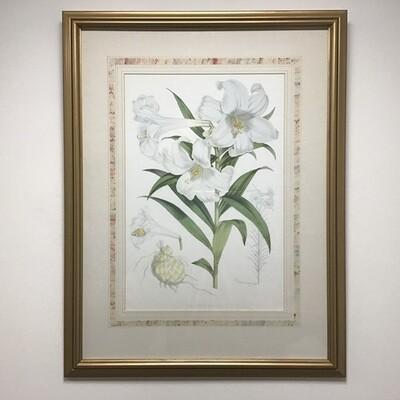 Easter Lily Framed Print