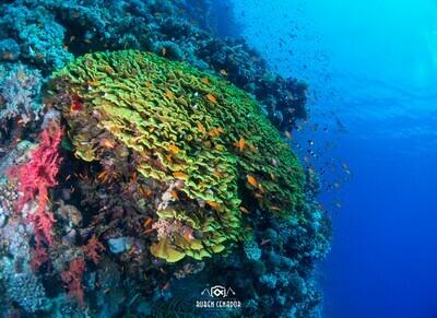 Cuadro Imagen Submarina