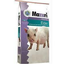 Mini Pig Elder