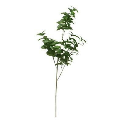 Camellia Branch, 45