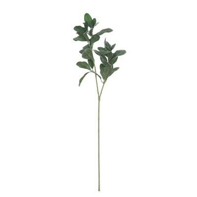 Lemon Tree Branch, 28
