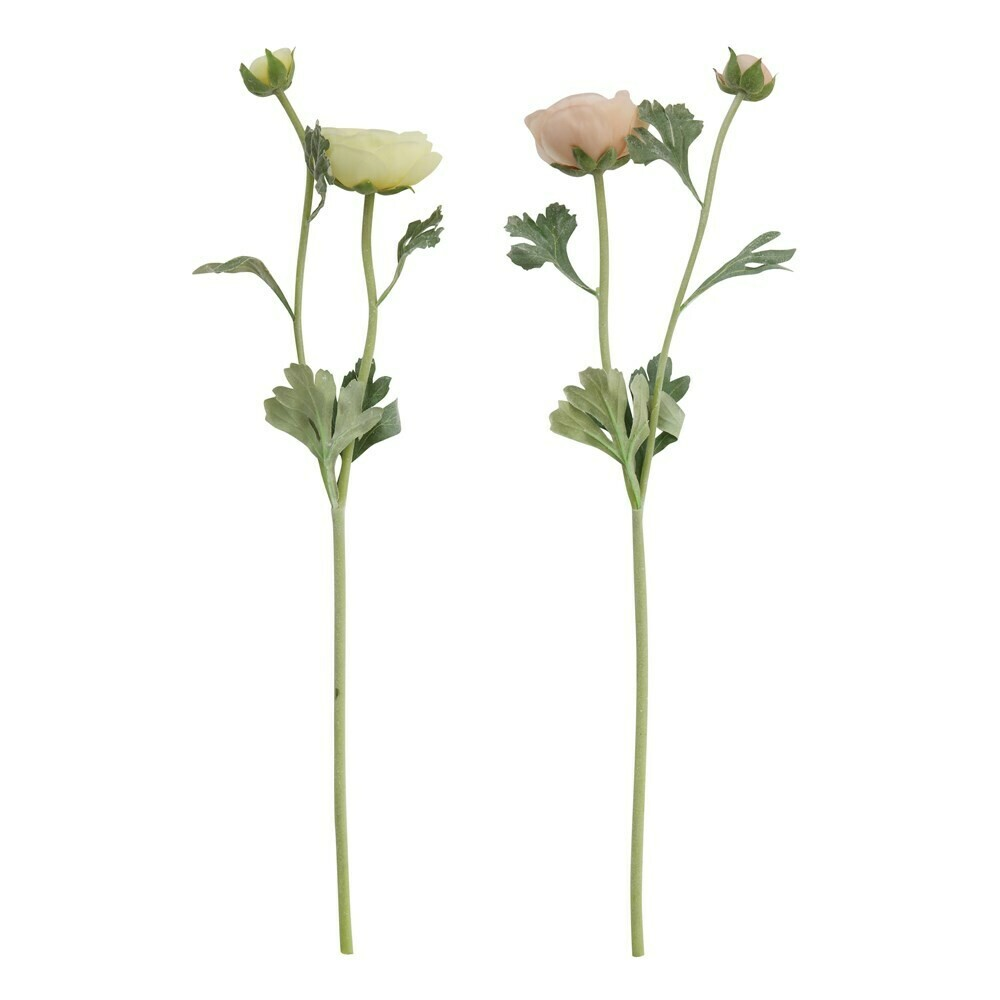 "Ranunculus Stem, 22"""