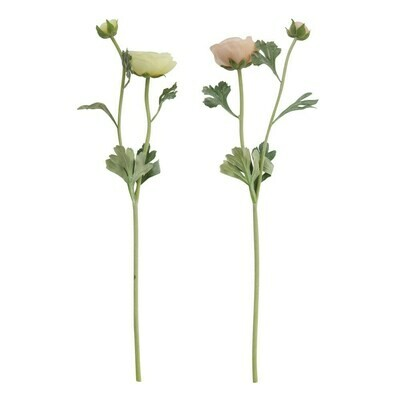 Ranunculus Stem, 22