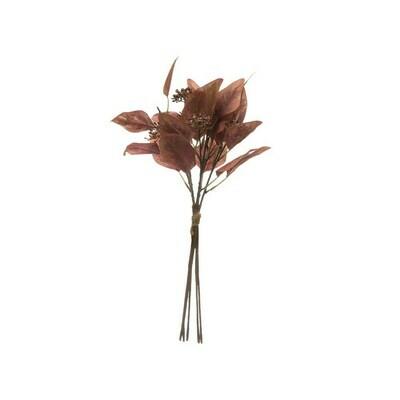 Red Leaf Eucalyptus Stem