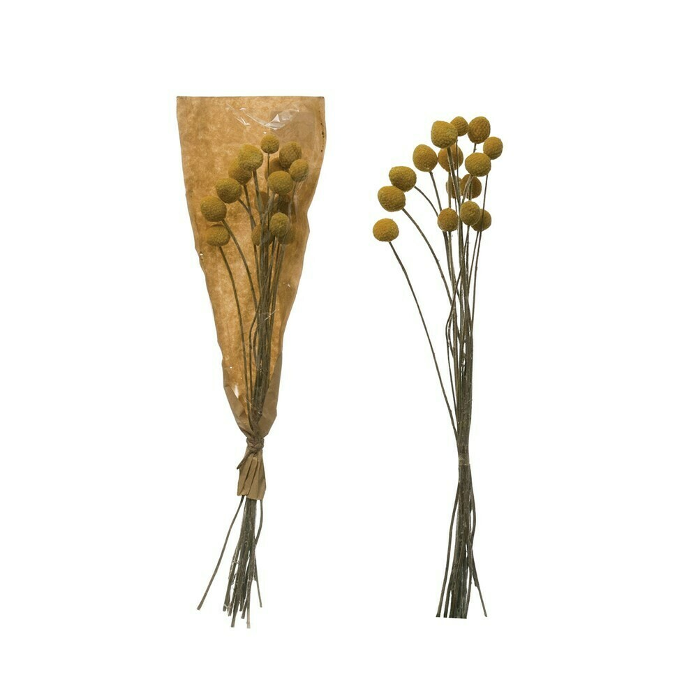 Dried Natural Craspedia Bunch, Yellow
