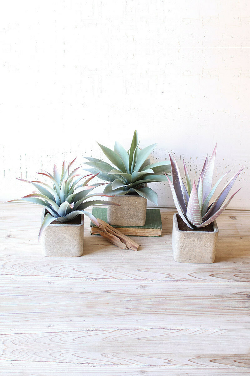 Large Succulent In Square Pot