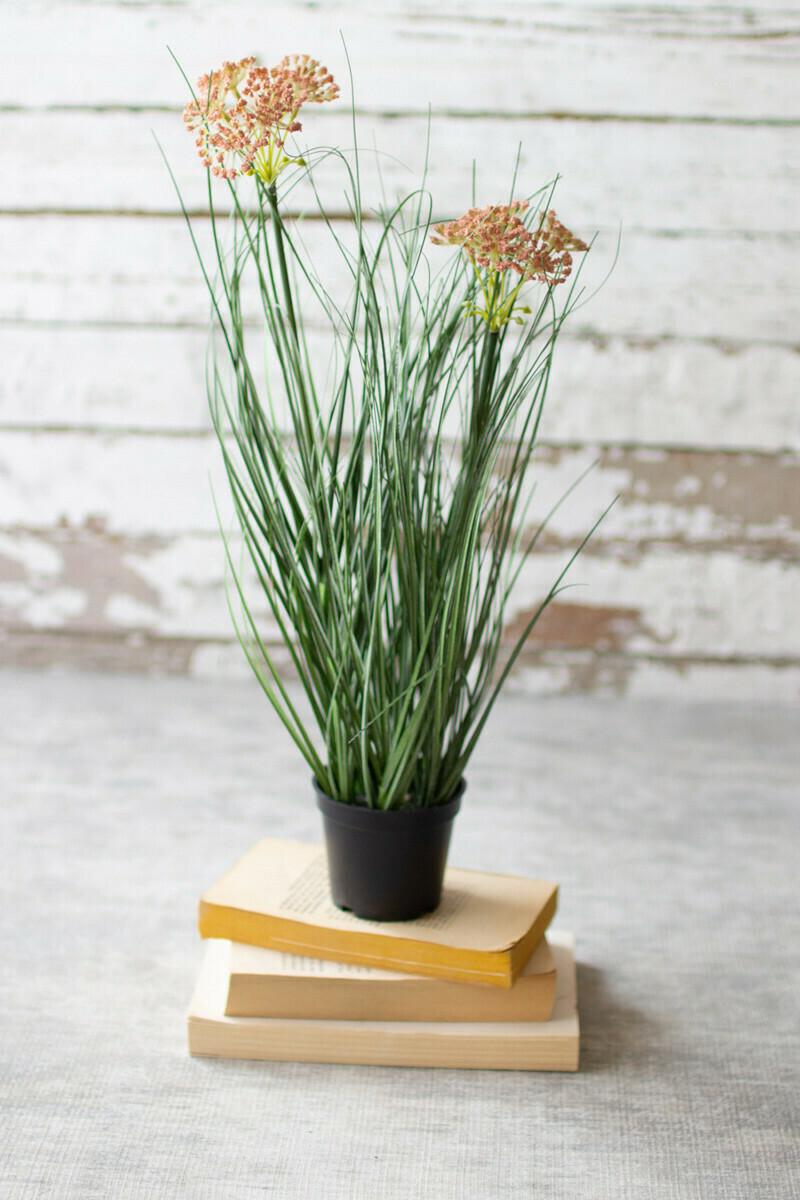 Flowering Onion Grass In Pot