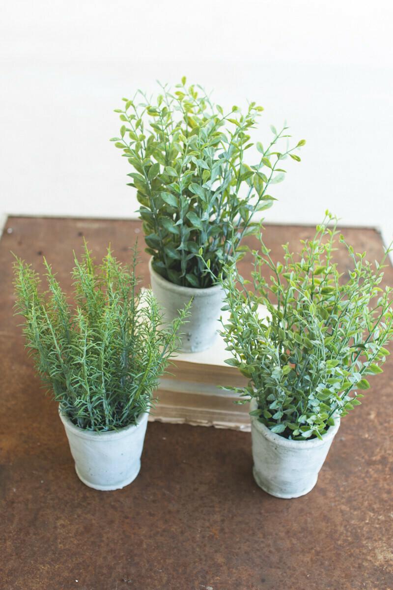 Herb Plant In Concrete Pot