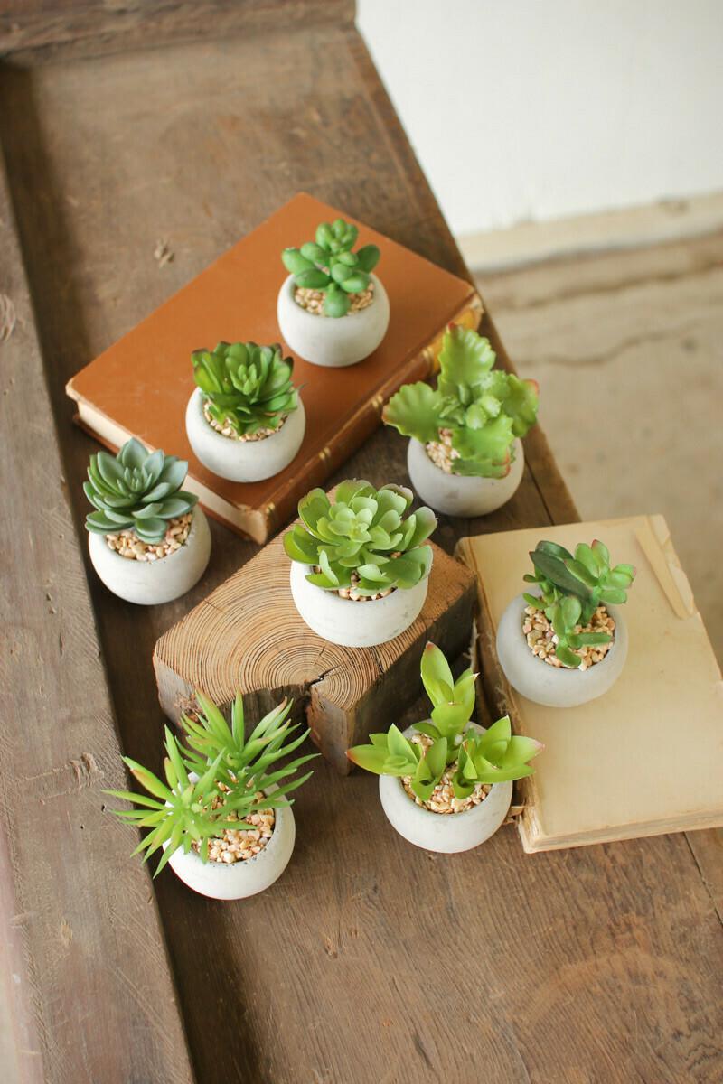 Mini Succulent In Round Concrete Pot