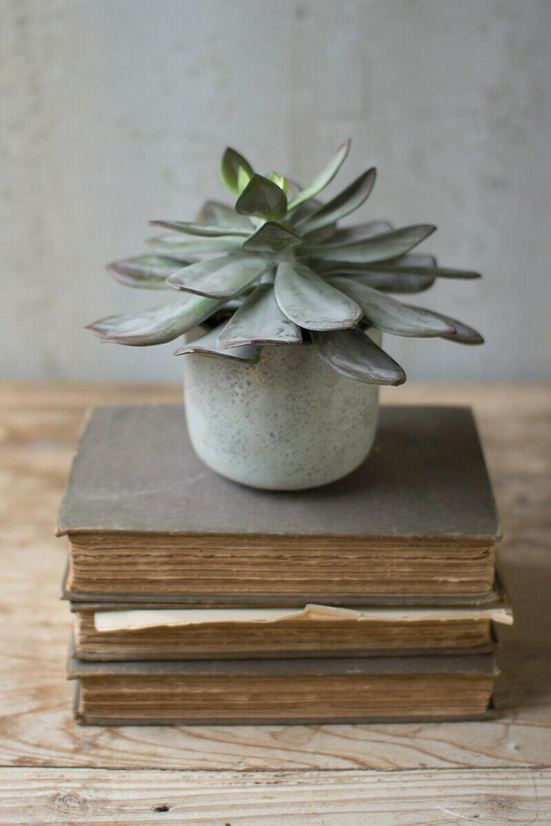 "Succulent In Cement Pot 7"""