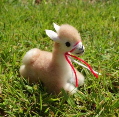 Mini Alpacas Cushed
