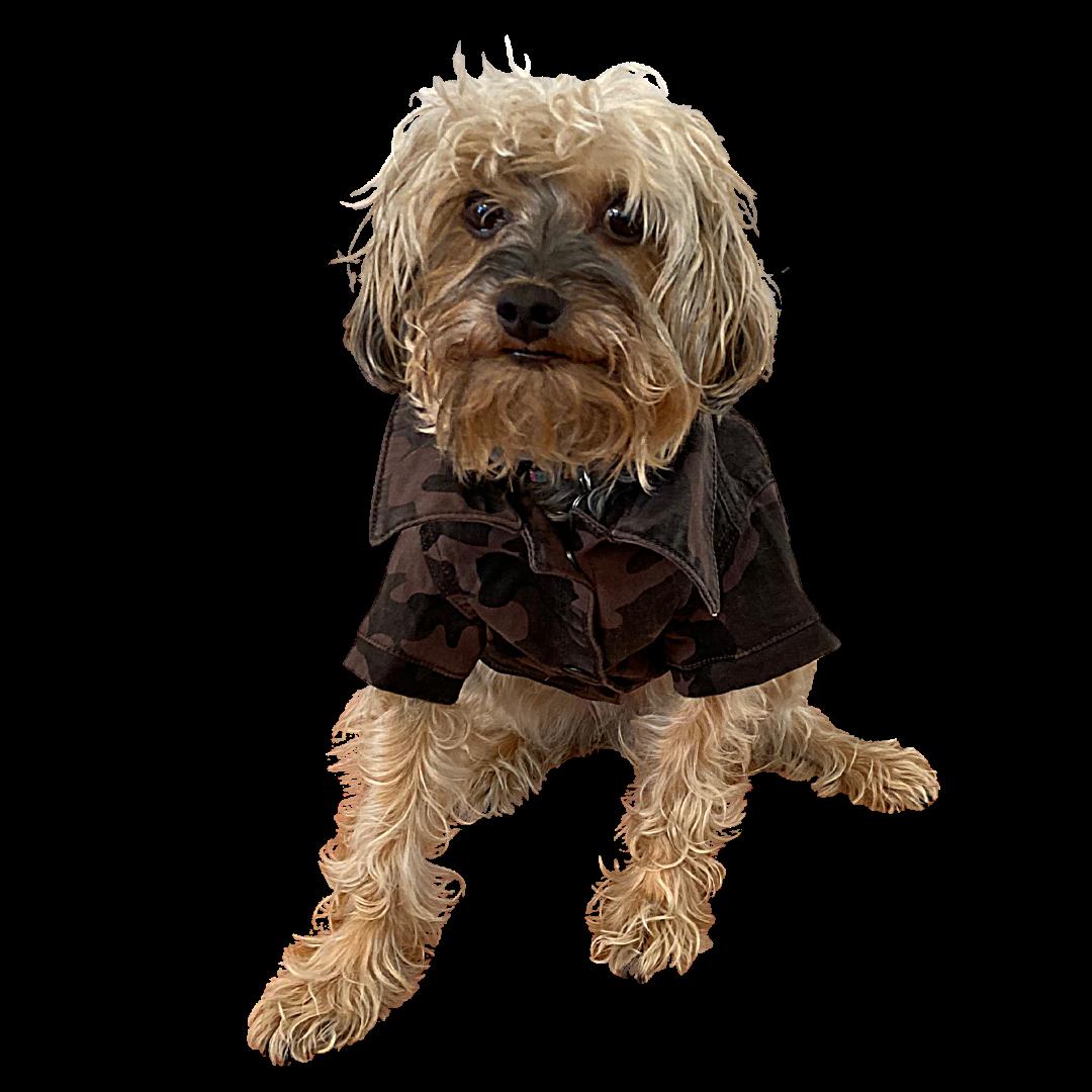 DL1961 Luna Canine Trucker Jacket Dog Small