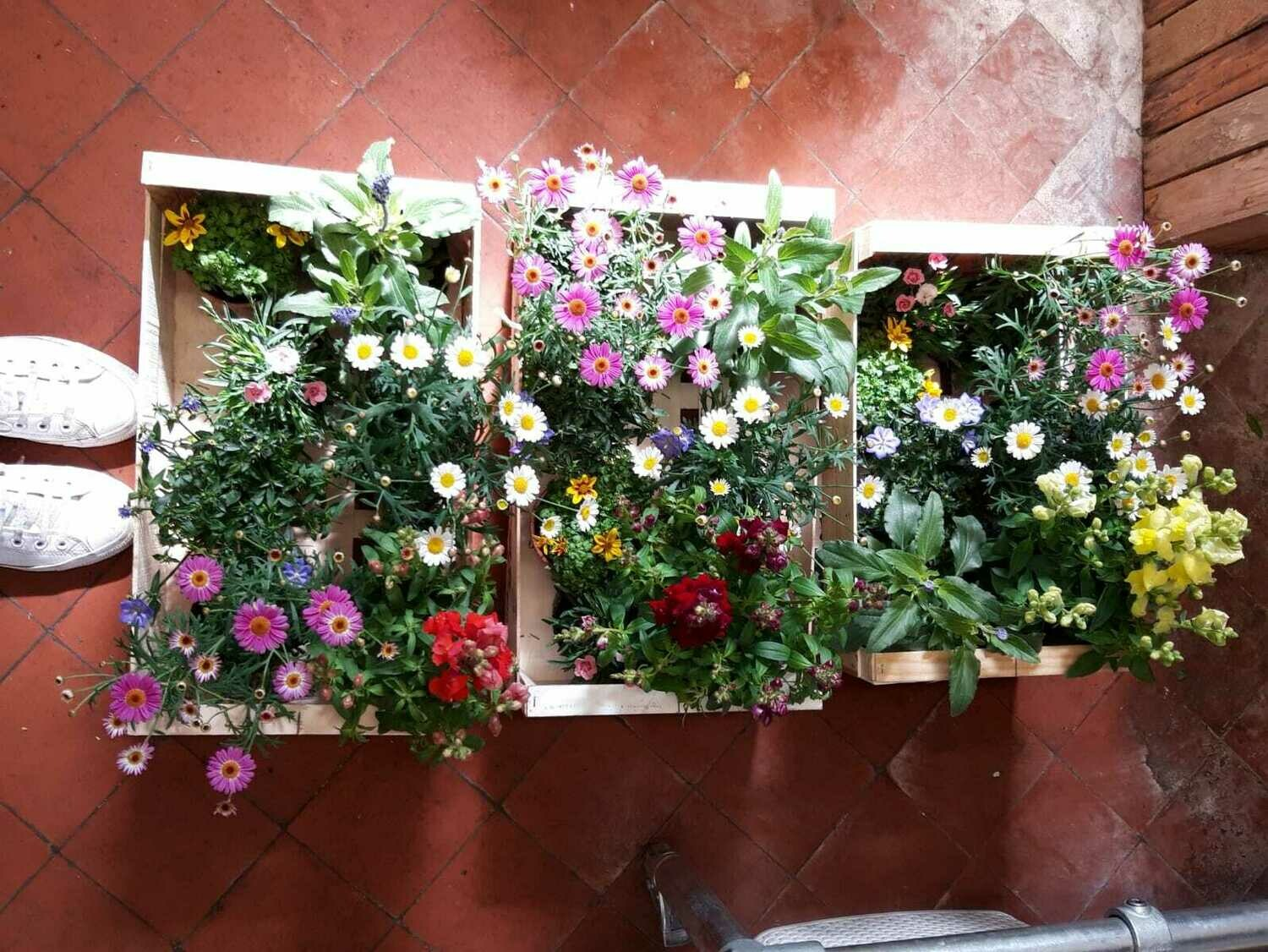 Mixed Plant Box