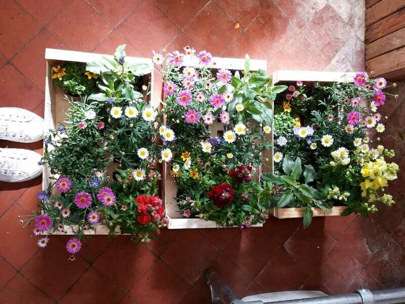Mixed Plant Box