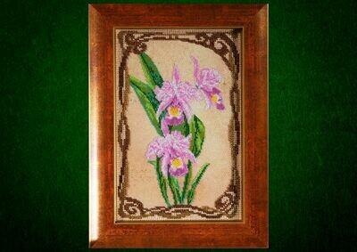 Грациозные орхидеи 💎