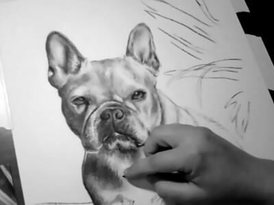 Custom Graphite/Charcoal Pet Portrait