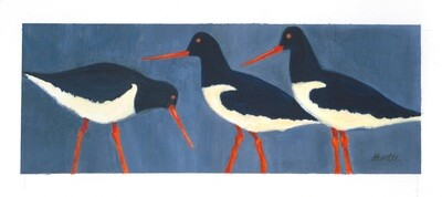 3 Oystercatchers