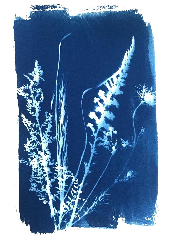 Flowers Cyanotype-3