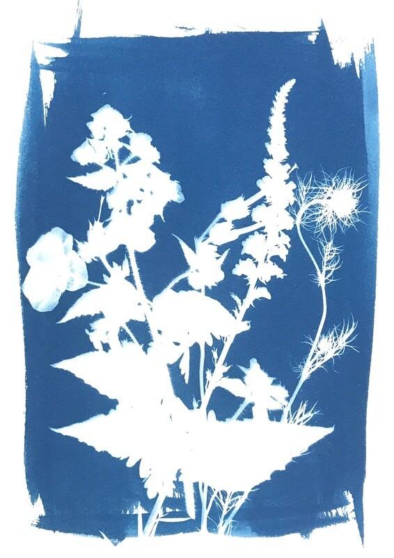 Flowers Cyanotype-4