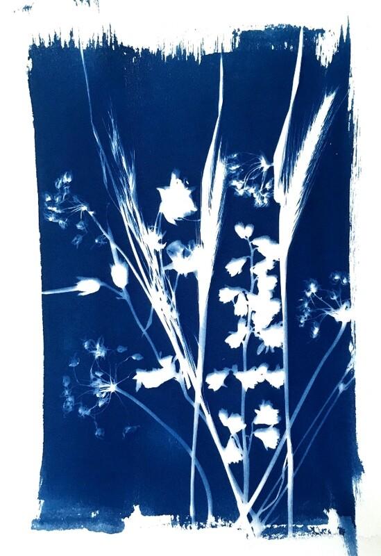 Flowers Cyanotype-1