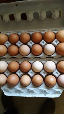 Organically-fed Free-range Eggs, 1 dozen jumbo
