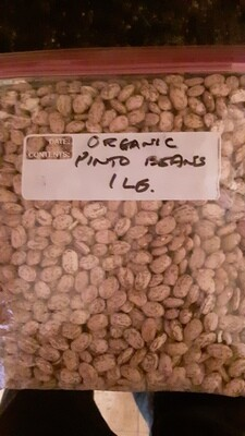 Genesee Valley Bean organic pinto beans, 1 lb