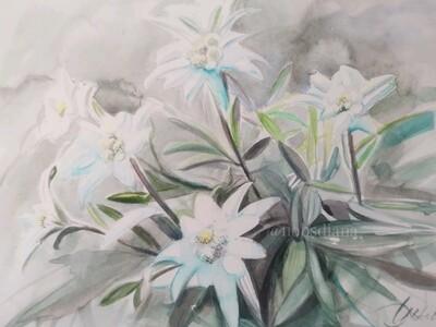 Beautiful Edelweiss | Fine ART PRINT