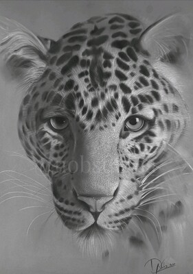 Jaguar /Limited edition print