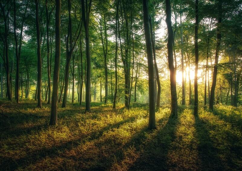 Quiet Woodland