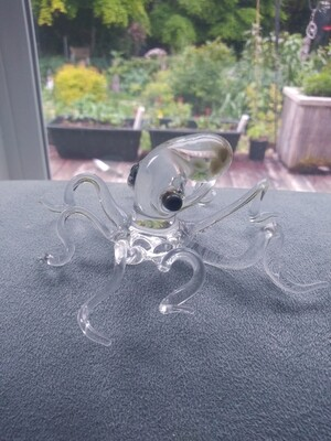 Clear octopus
