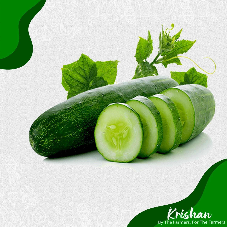 শসা (Cucumber)