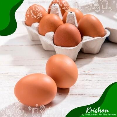 লেয়ার ডিম (Layer Egg)