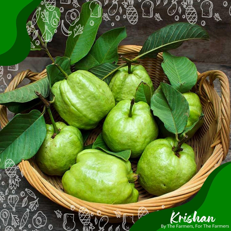 থাই পেয়ারা (Thai Guava)