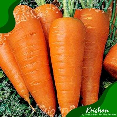 গাজর (Carrot)