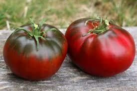 עגבניה BIG