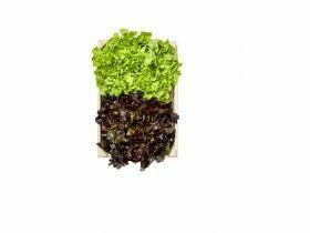 Salanova Crispy