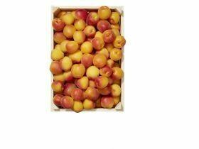 Abricots emballés 1Kg