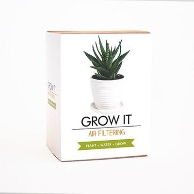 Coffret Plante qui filtre l'air
