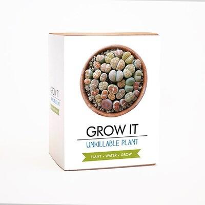 Coffret Plante indestructible