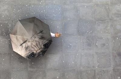 Beau parapluie Chien