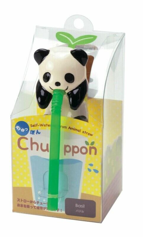 Le petit panda qui boit de l'eau et fait pousser du basilic