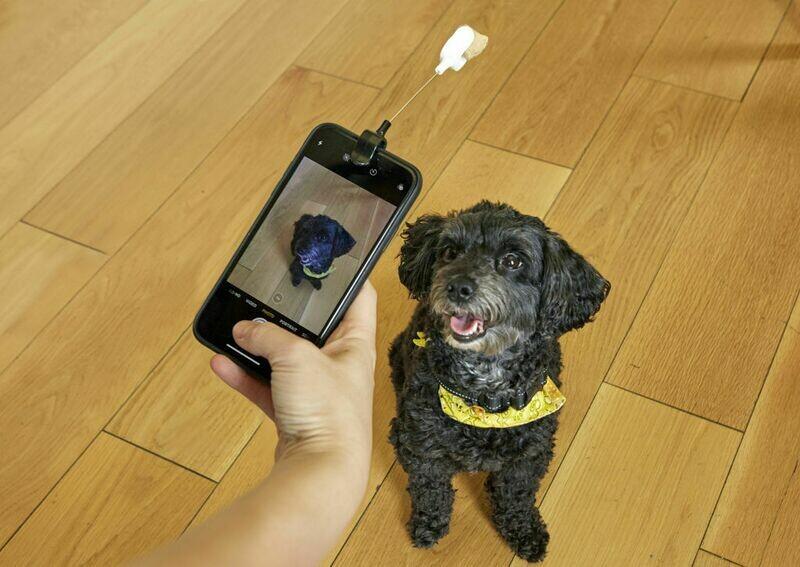 Clip selfie pour chien