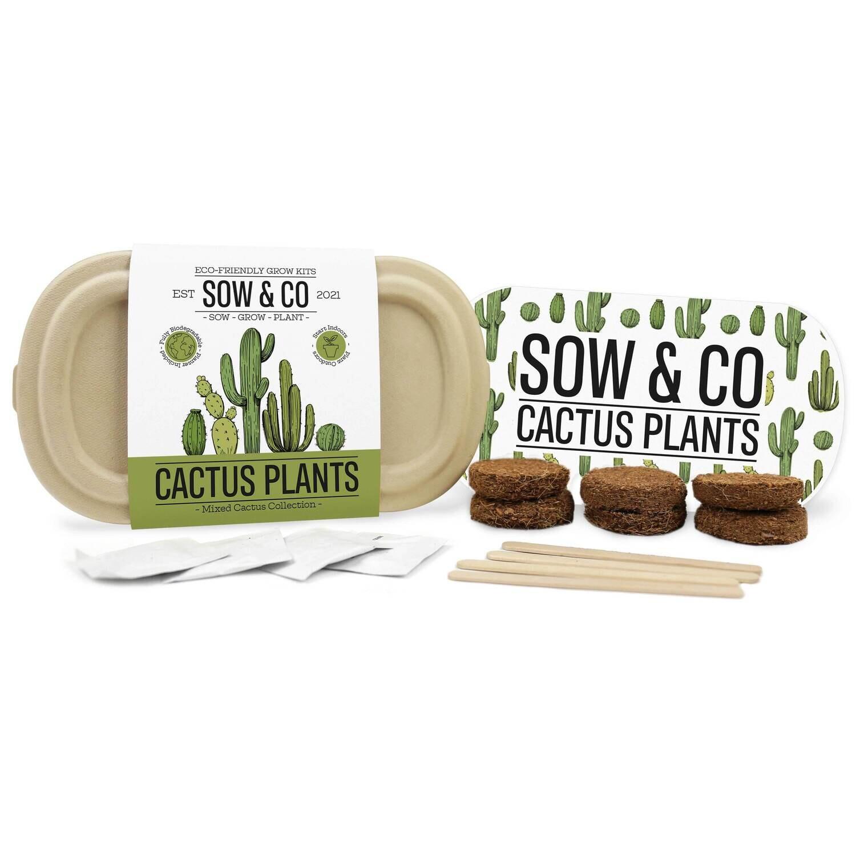 Coffret semer ses cactus